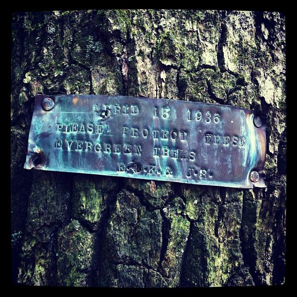 Evergreen Legacy