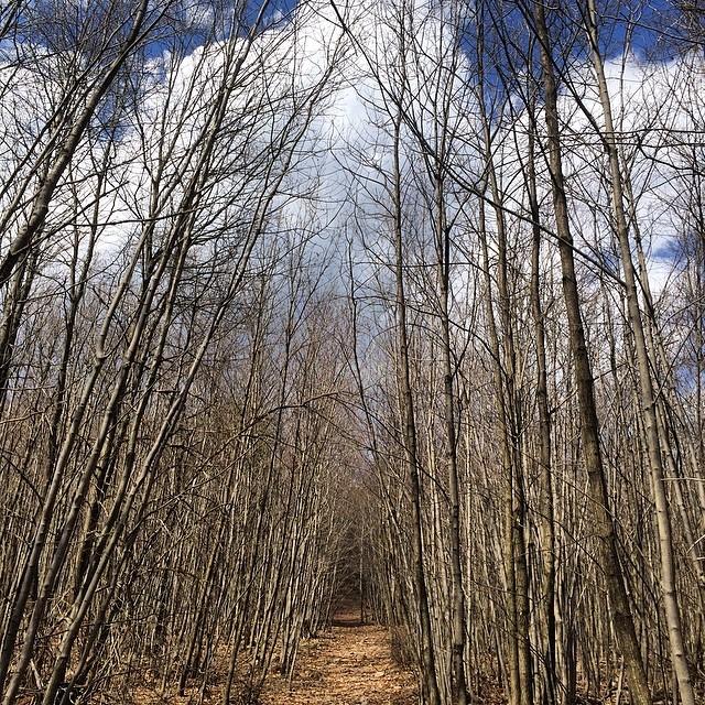Reeds Gap