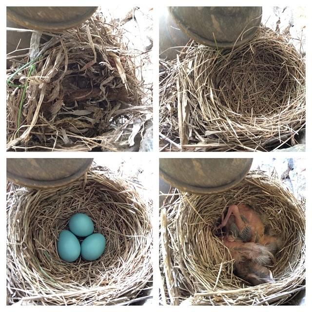 Robin's Nest Photo Timeline