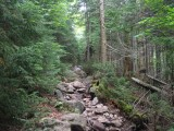 Up the trail from Marcy Dam; the trail was still rather dry with only a light incline