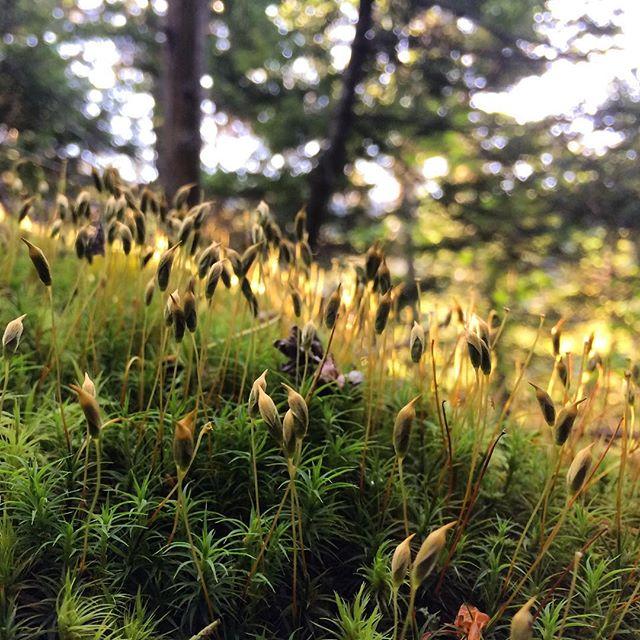 Adirondacks Wilderness Moss